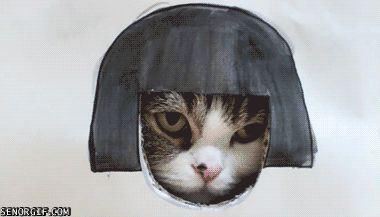 gifa cat conspiration