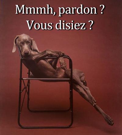 pardon vous disiez - lofty dog is lofty
