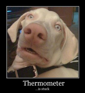 Thermometer Is Stuck - dog
