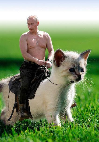 putin_cat