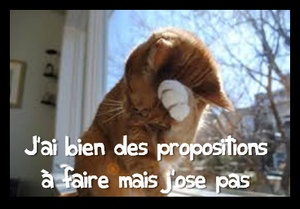 shy cat propositions