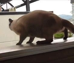 gifa cat jump fail