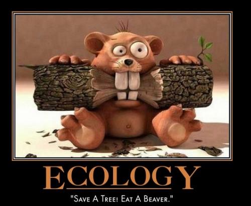 ecology save a tree eat a beaver