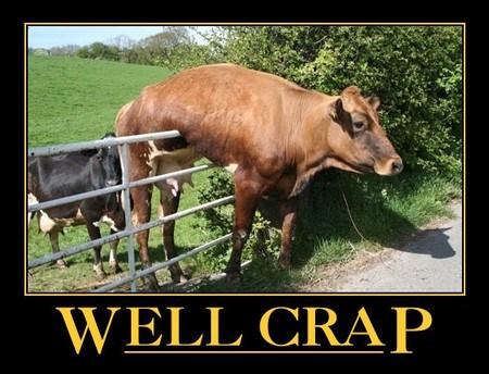oh crap cow