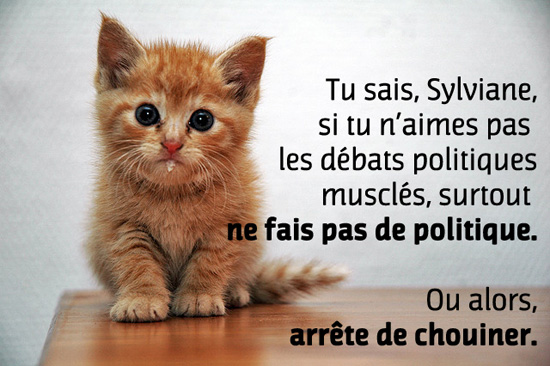chaton mignon pour sylviane