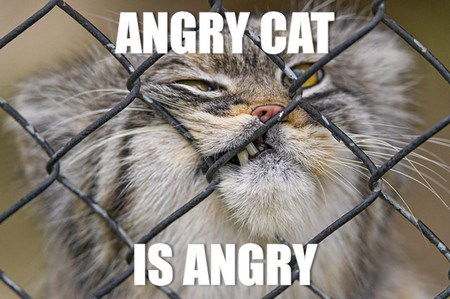 angry cat is angry